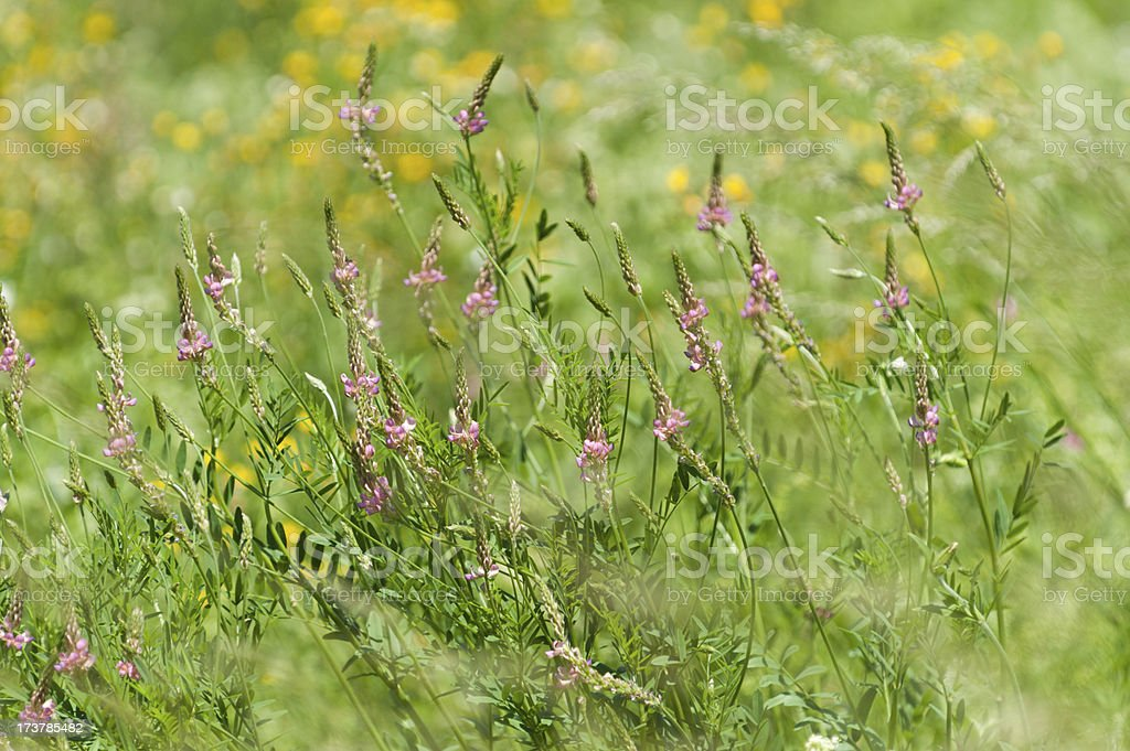 flower field in summer stock photo