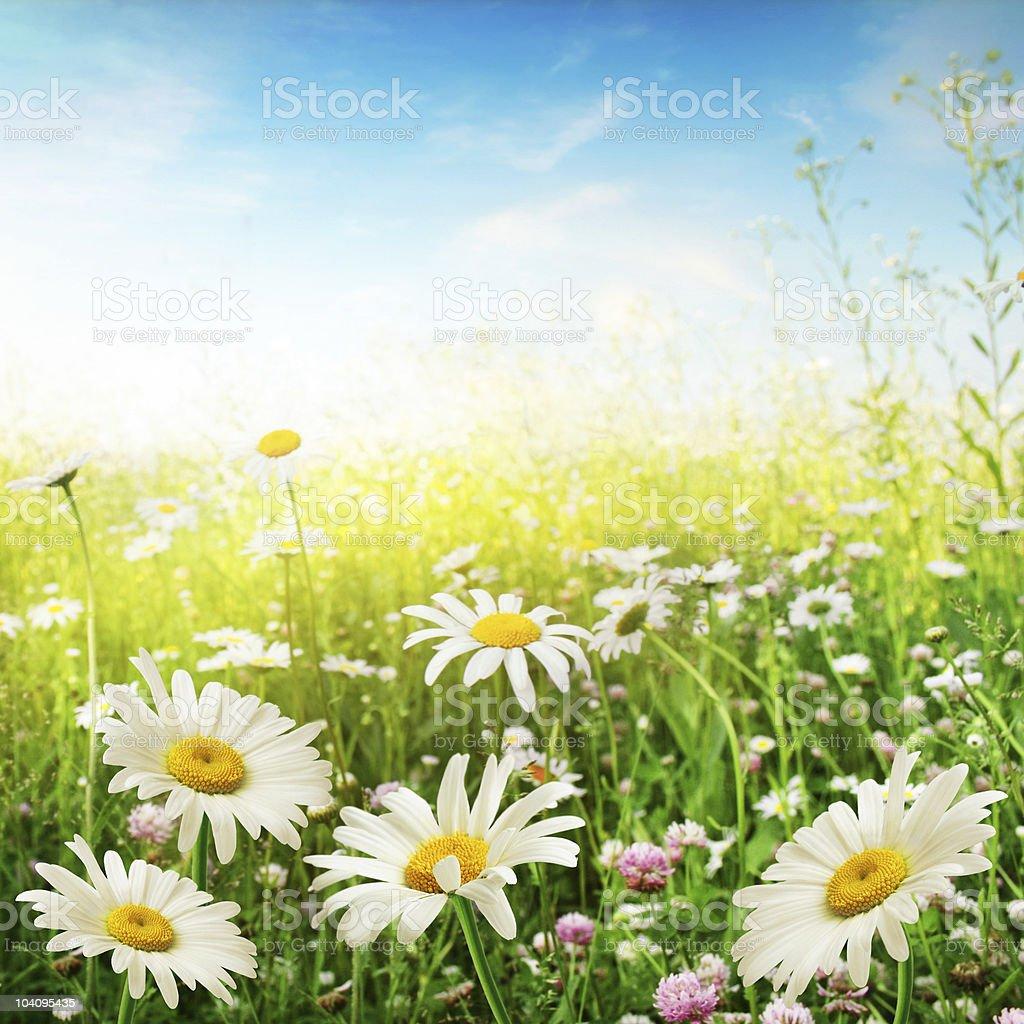 Flower field. stock photo
