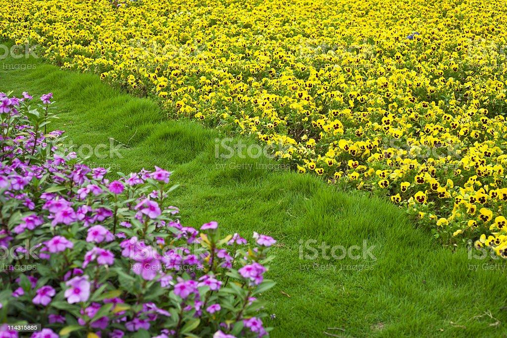 Flower field stock photo