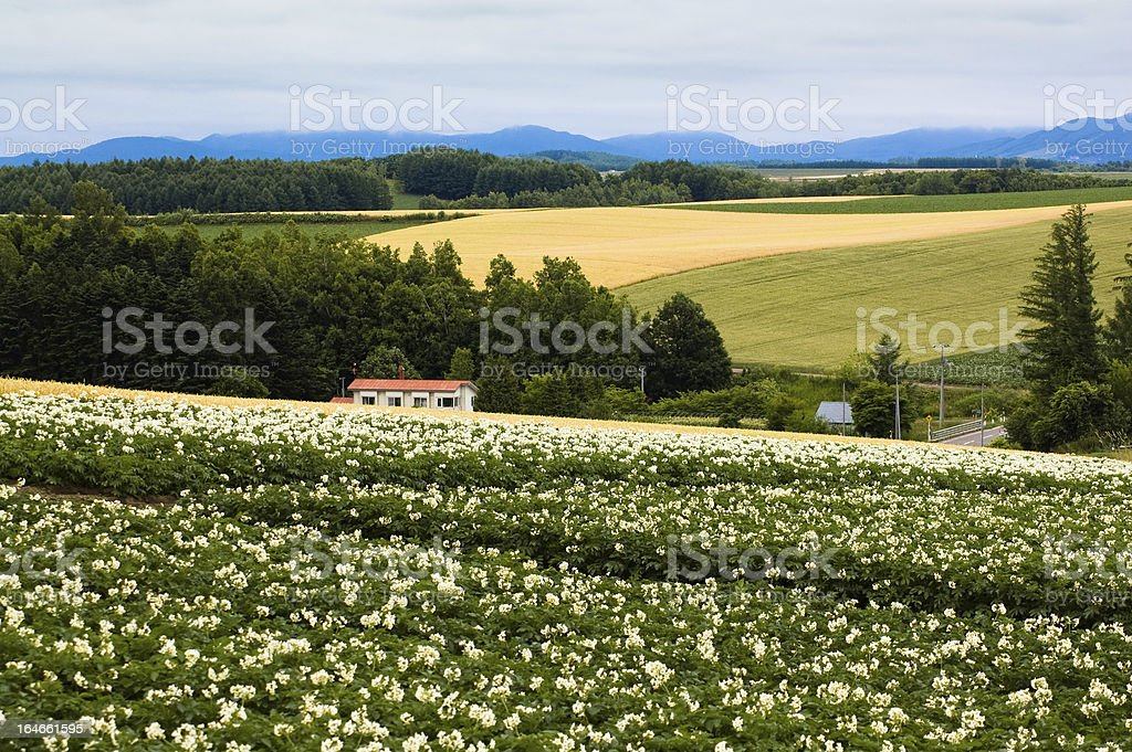 Flower field stock photo