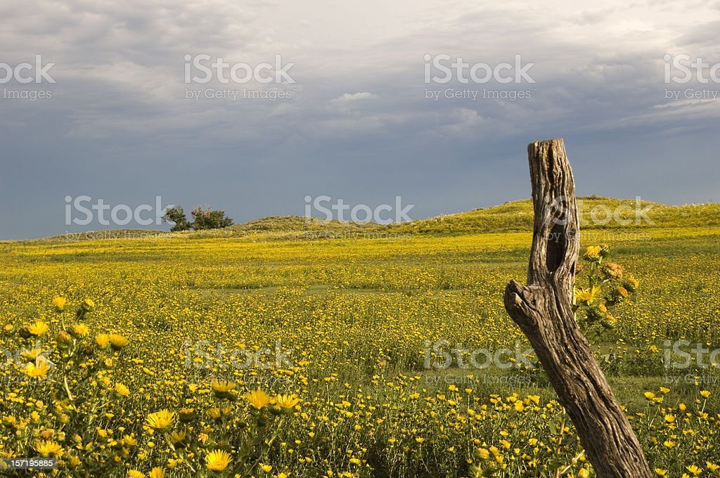Flower field, sky and post stock photo