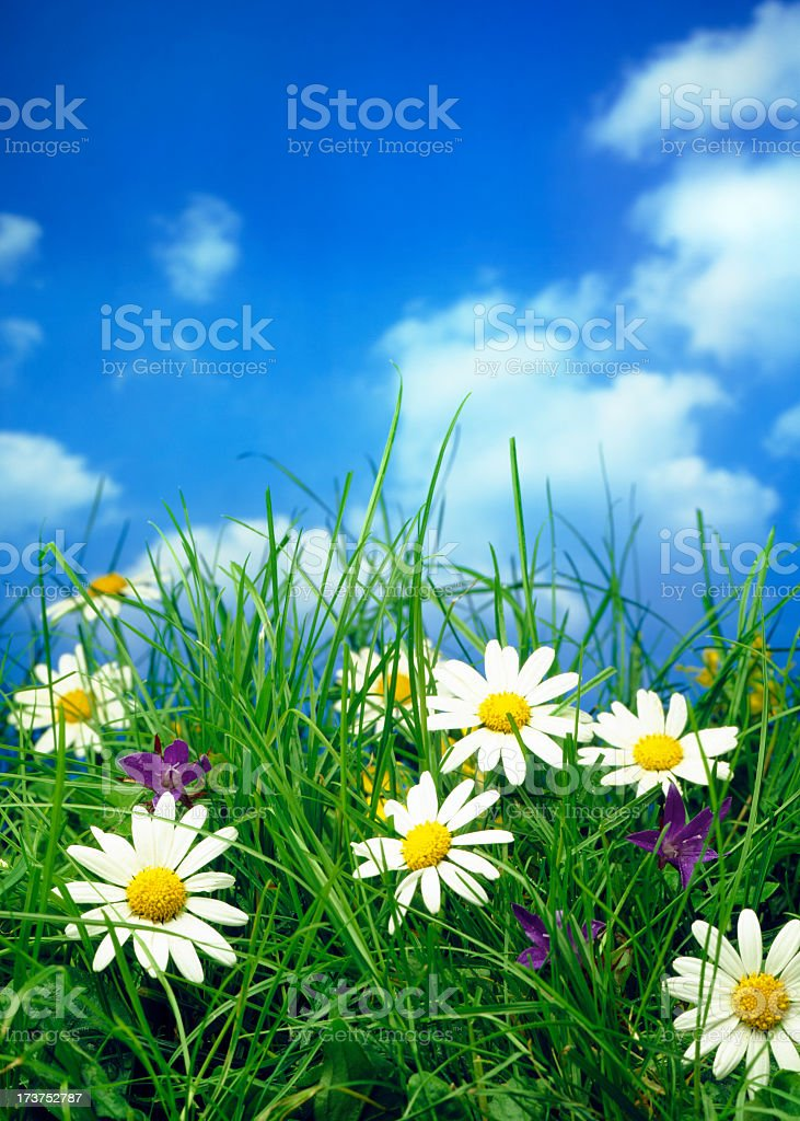 Flower field under a clear blue sky royalty-free stock photo