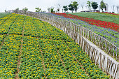 Flower field with fence