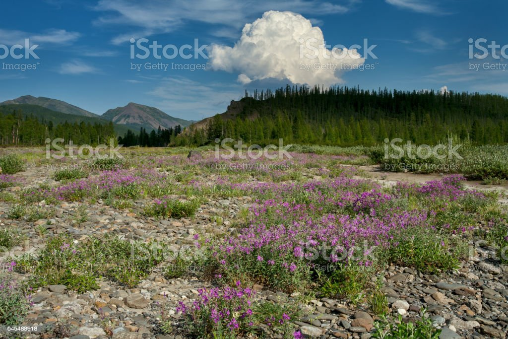Flower fields on the river Bank. stock photo