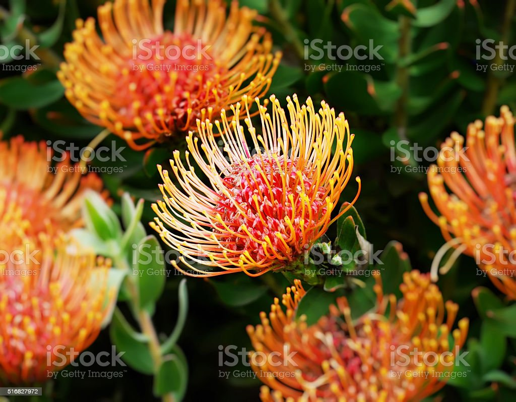 Flower Fireworks stock photo