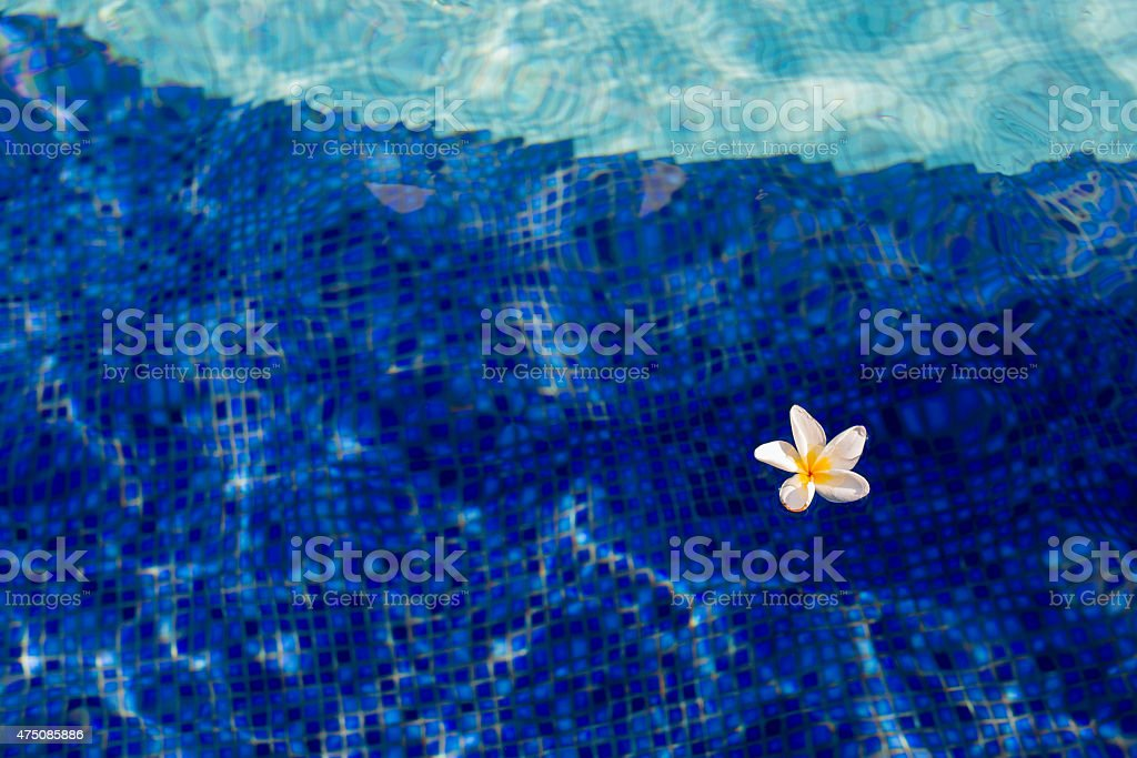 flower floating on the swimming pool stock photo