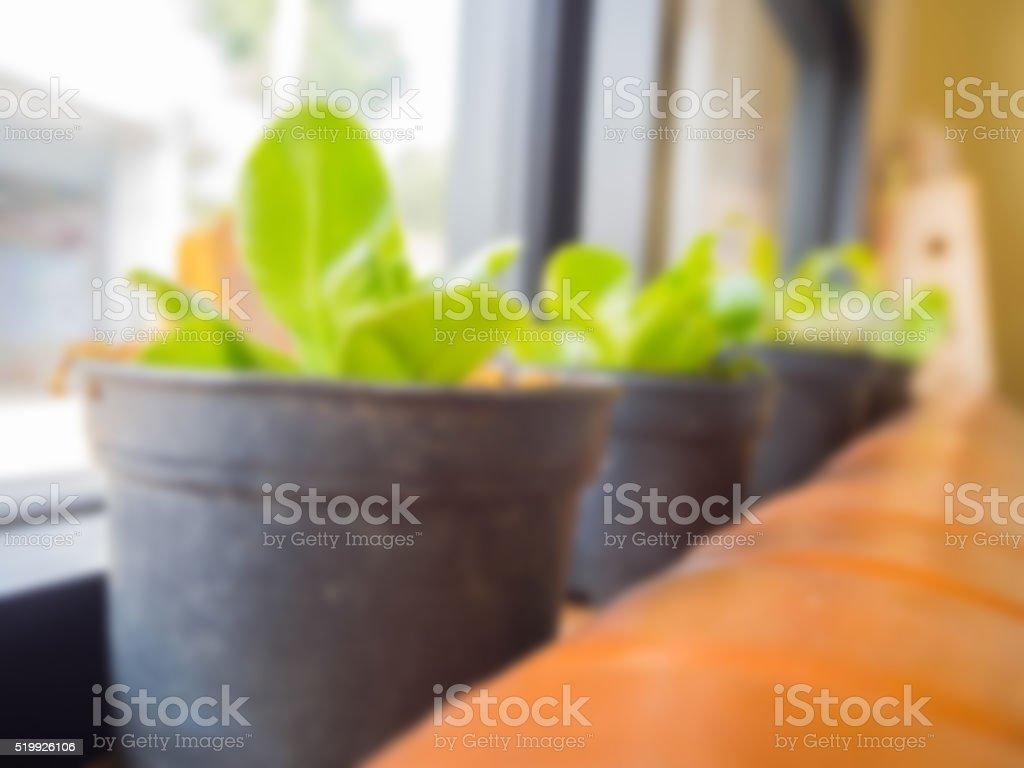 flower , flower pots stock photo