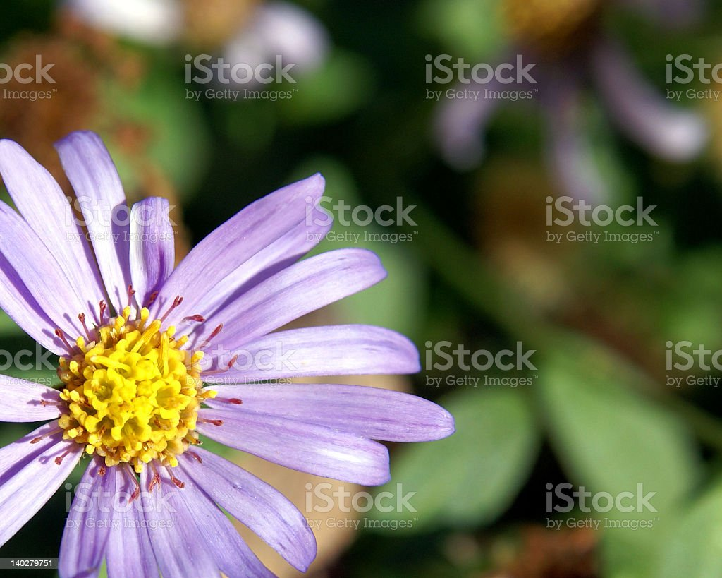 Flower for Easter royalty-free stock photo