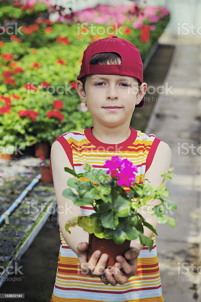 flower for you royalty-free stock photo