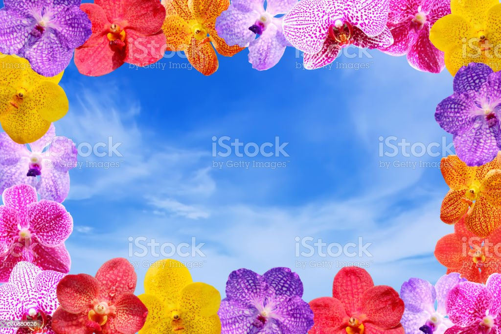 Flower frame background - Orchid flower stock photo