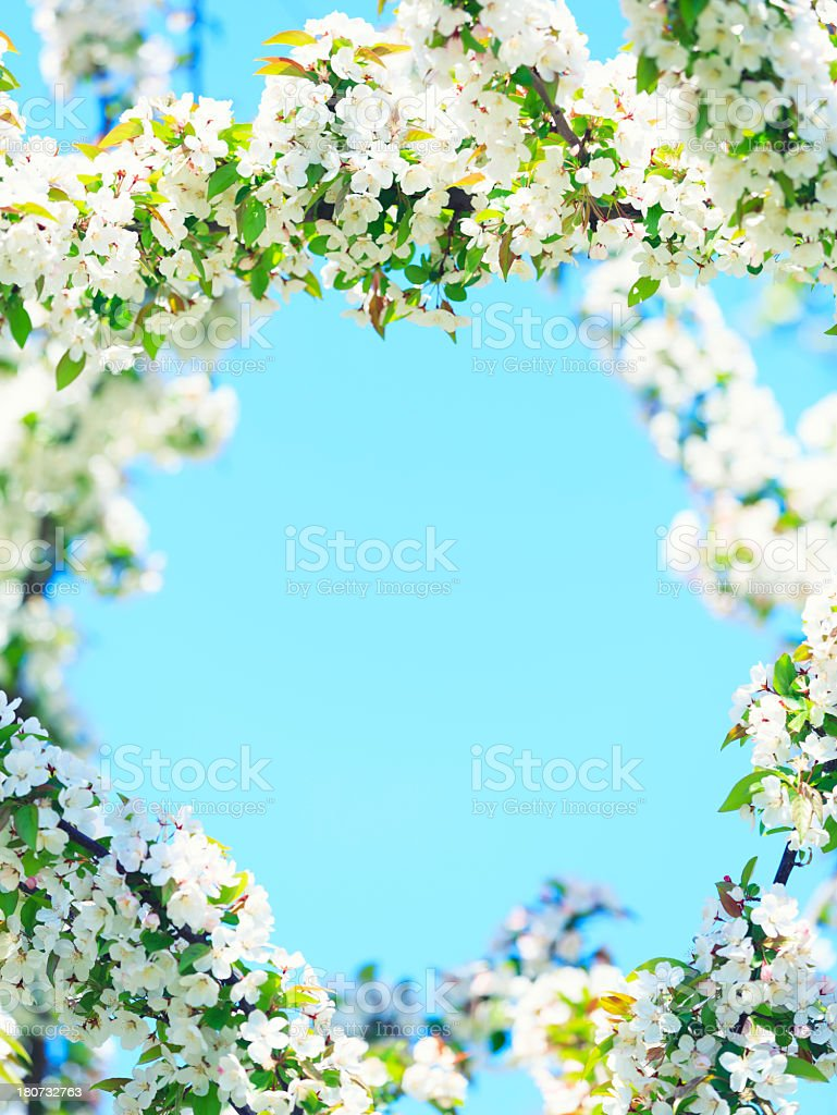 Flower frame royalty-free stock photo