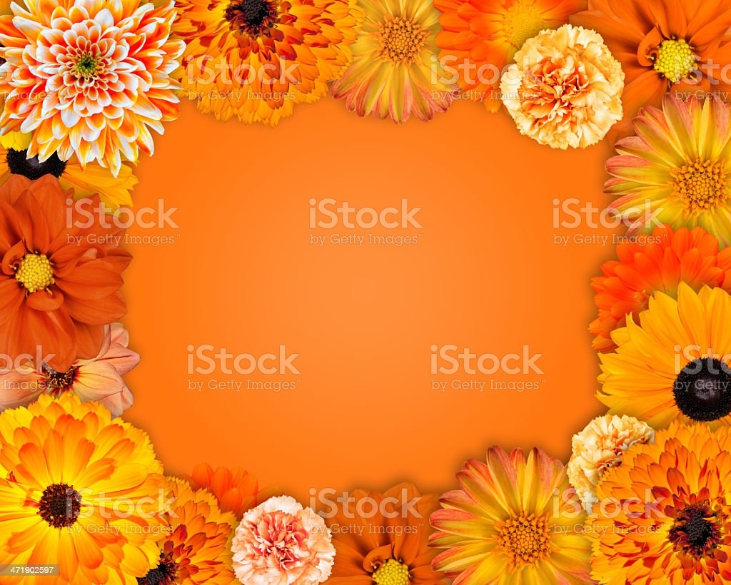Flower Frame with Orange Flowers royalty-free stock photo