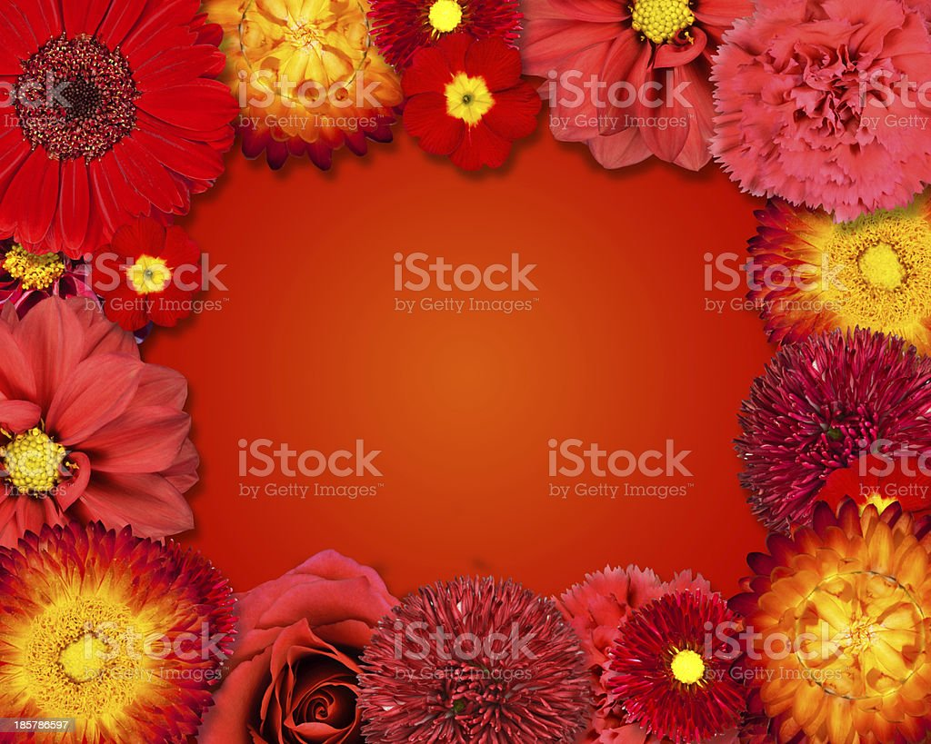 Flower Frame with Red Flowers on Orange Background royalty-free stock photo