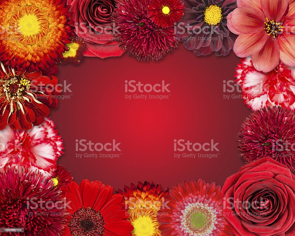 Flower Frame with Red Flowers on Purple Background royalty-free stock photo