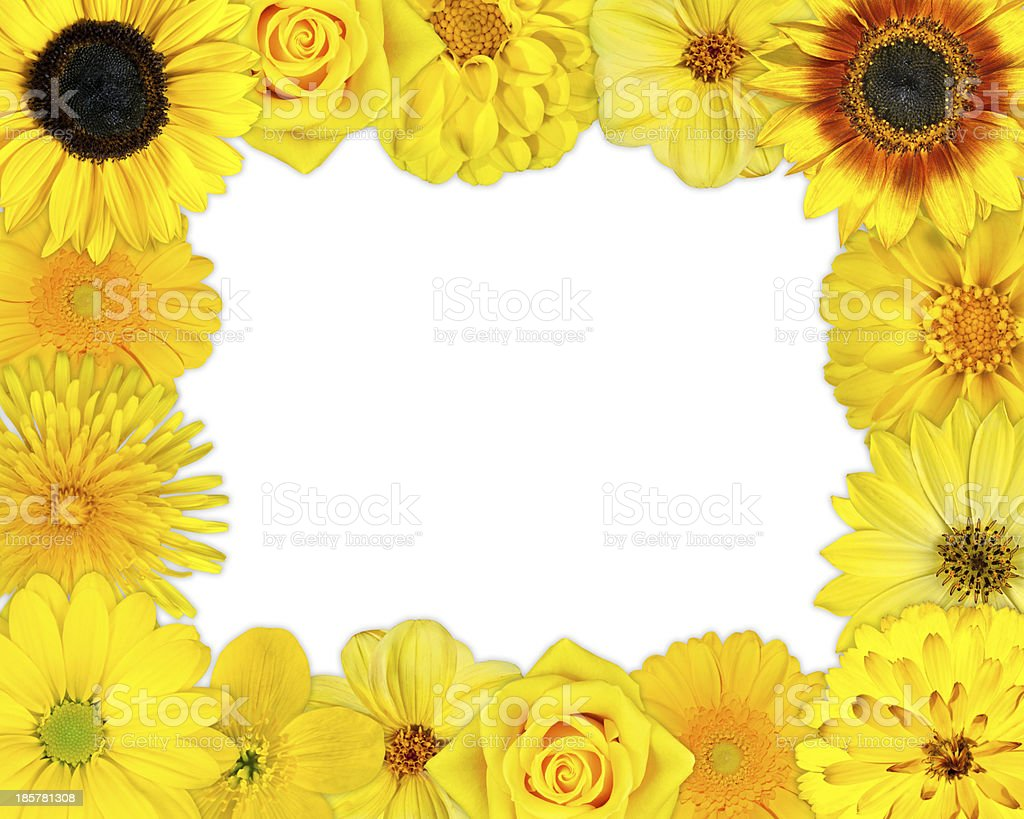 Flower Frame with Yellow Flowers on Blank Background royalty-free stock photo