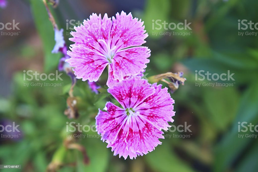 Flower from Thailand stock photo