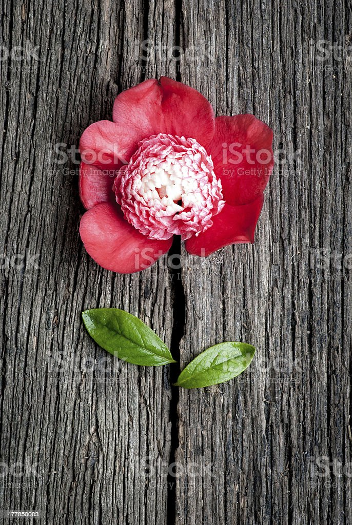 Flower Fun royalty-free stock photo