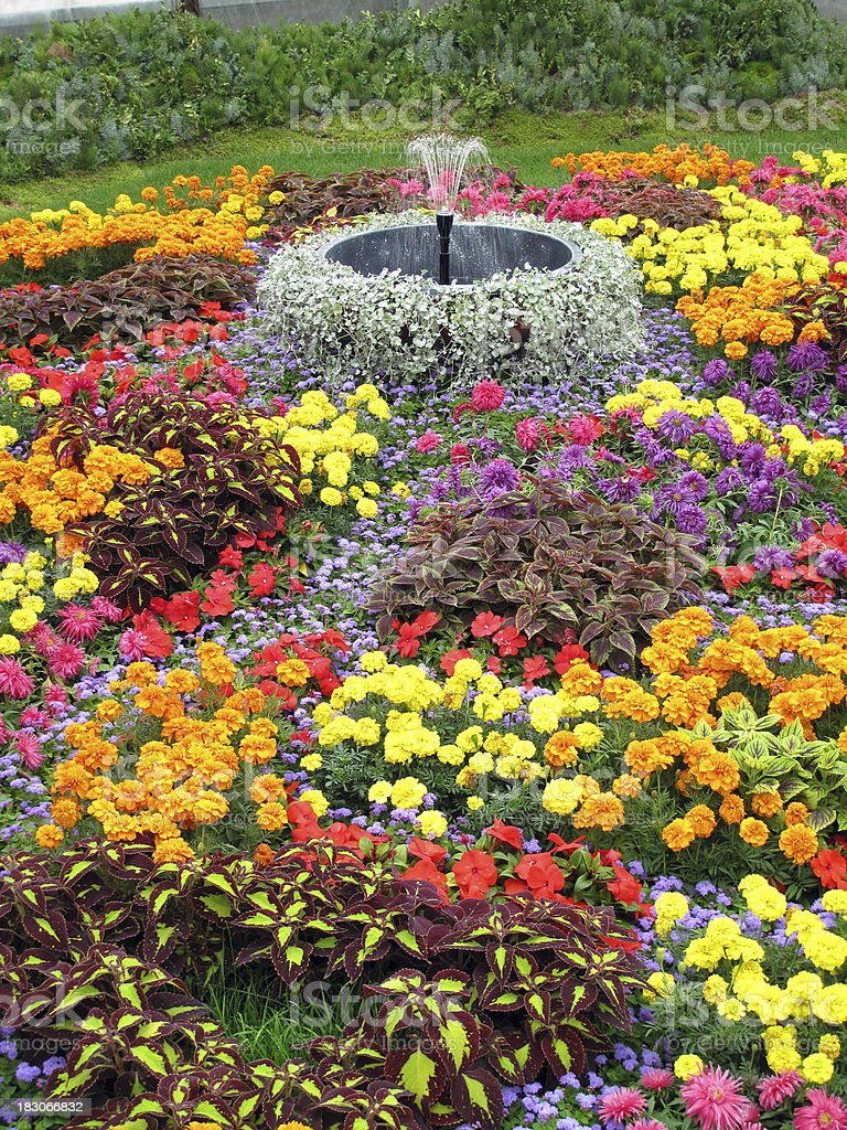 Flower garden in summer royalty-free stock photo