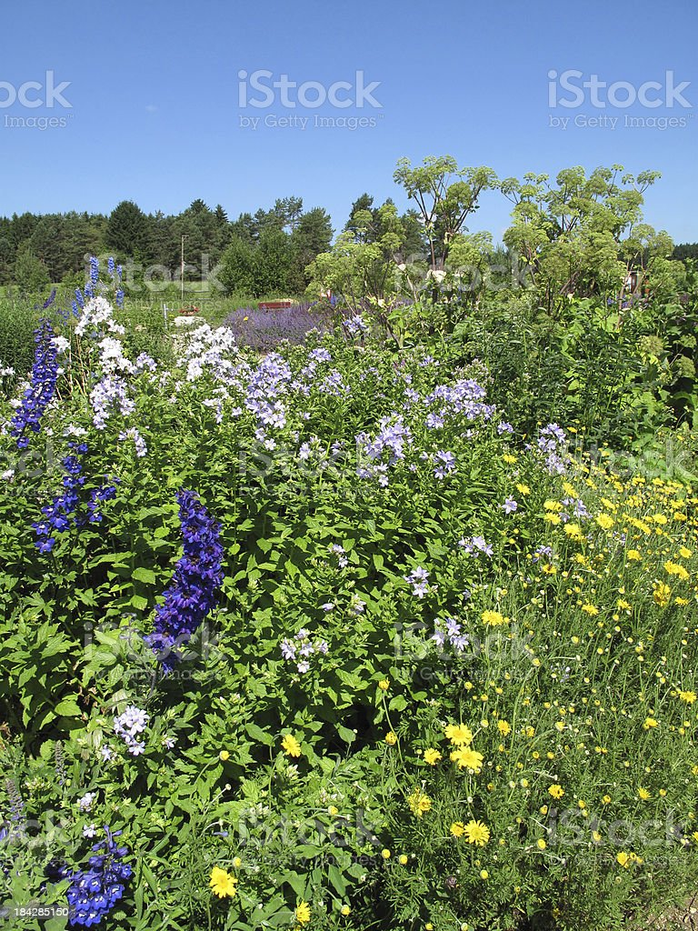 Flower garden in summer stock photo