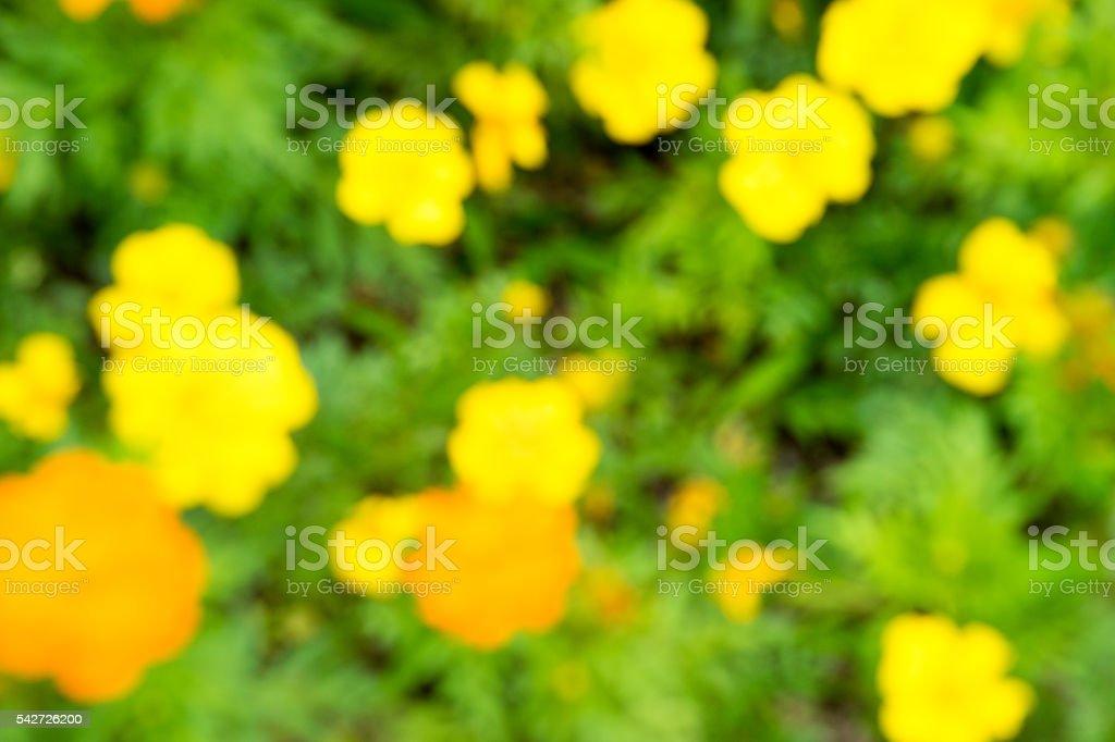 Jardin de fleurs de texture (le motif coloré et l'effet de flou) photo libre de droits