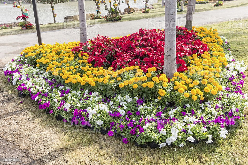 Flower garden on evening time stock photo