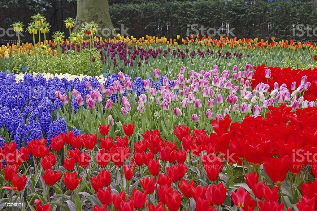 Flower garden # 1 royalty-free stock photo
