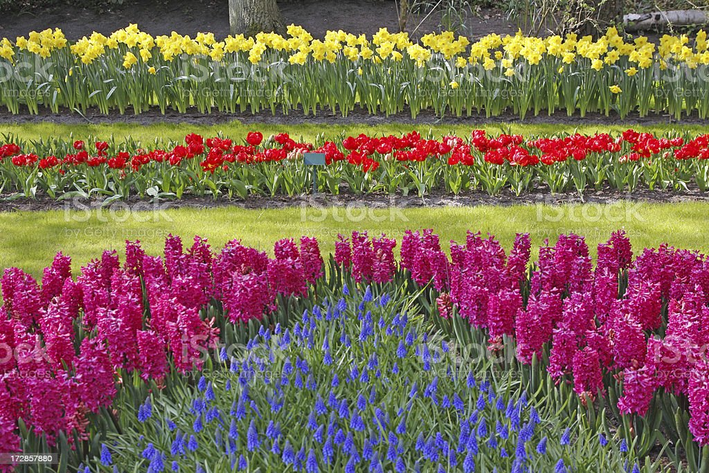 Flower garden # 8 royalty-free stock photo