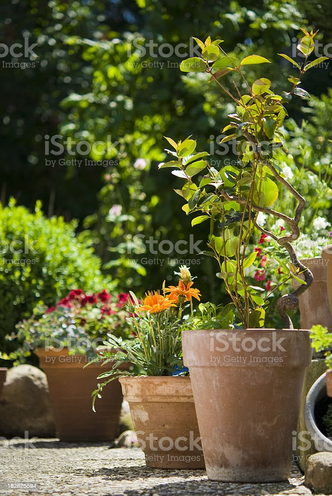 Flower Garden royalty-free stock photo