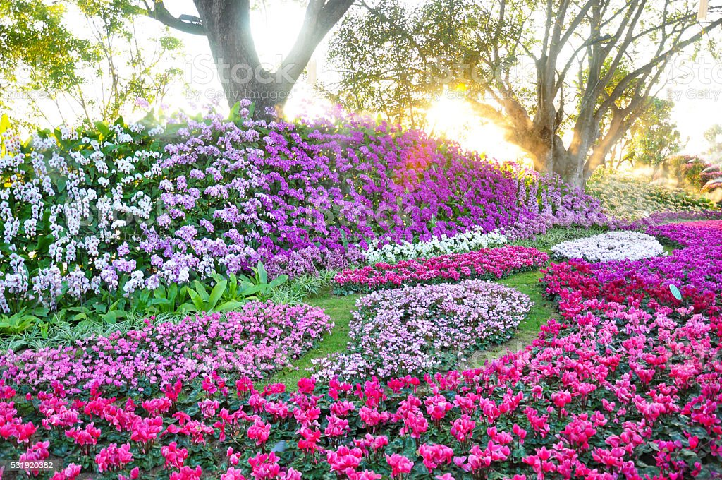 Flower garden plenty of flowers rounded by trees at sunset stock photo