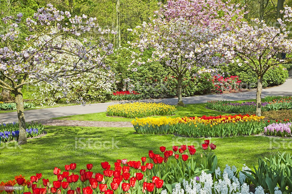 Flower garden # 48 XXXL royalty-free stock photo
