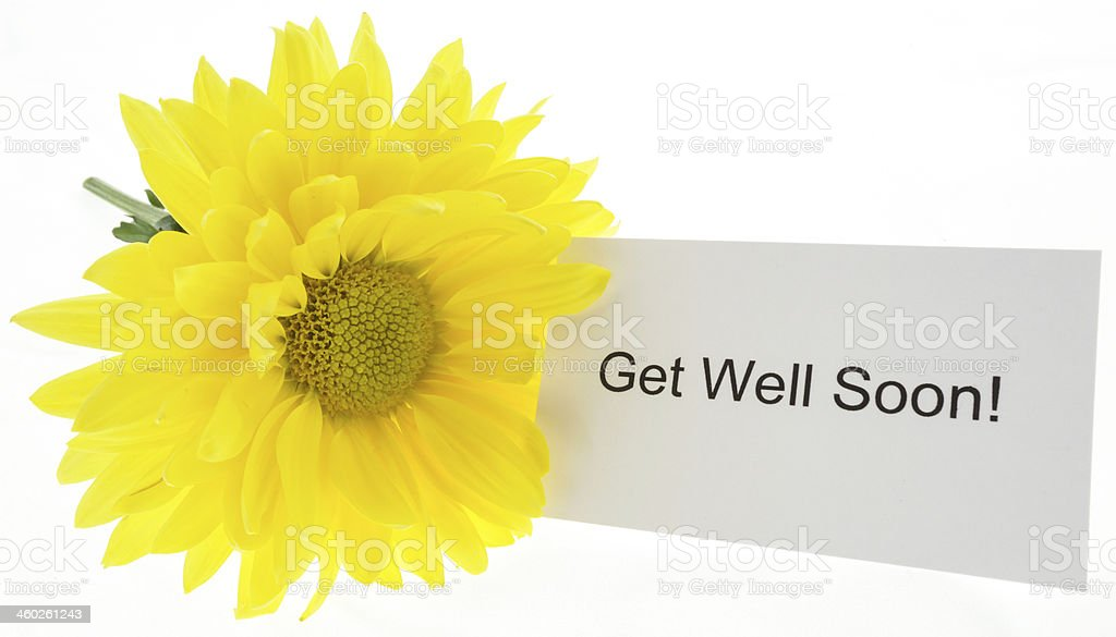 Flower Get Well royalty-free stock photo