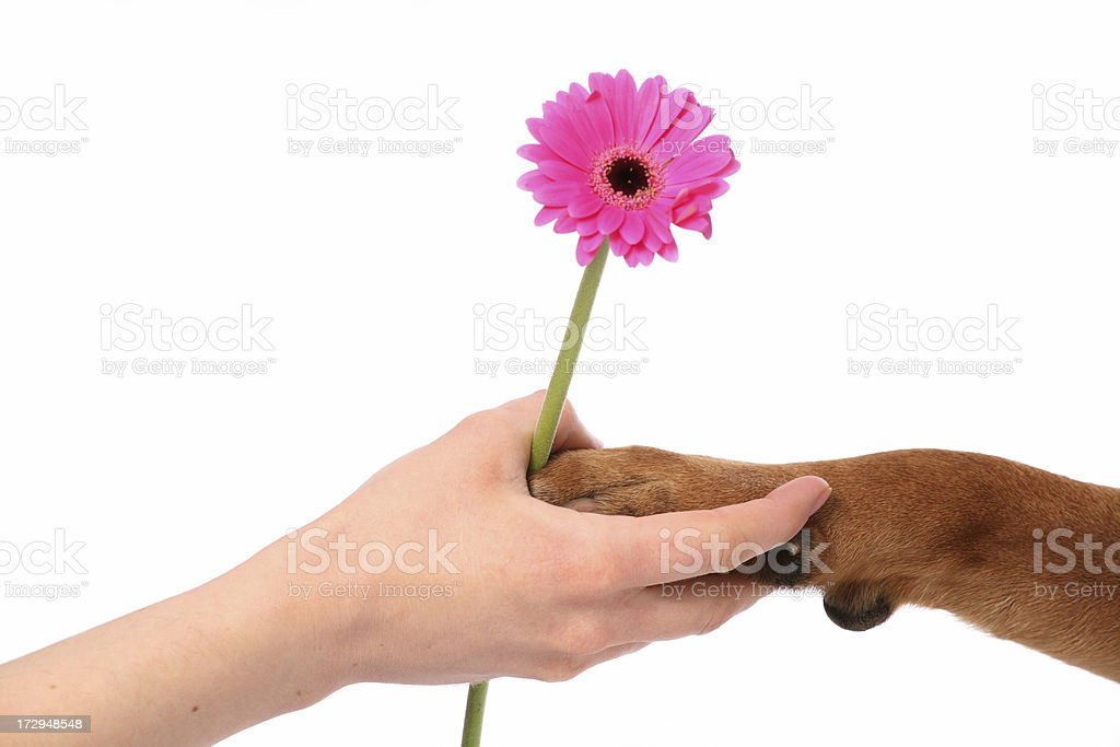 Flower gift royalty-free stock photo