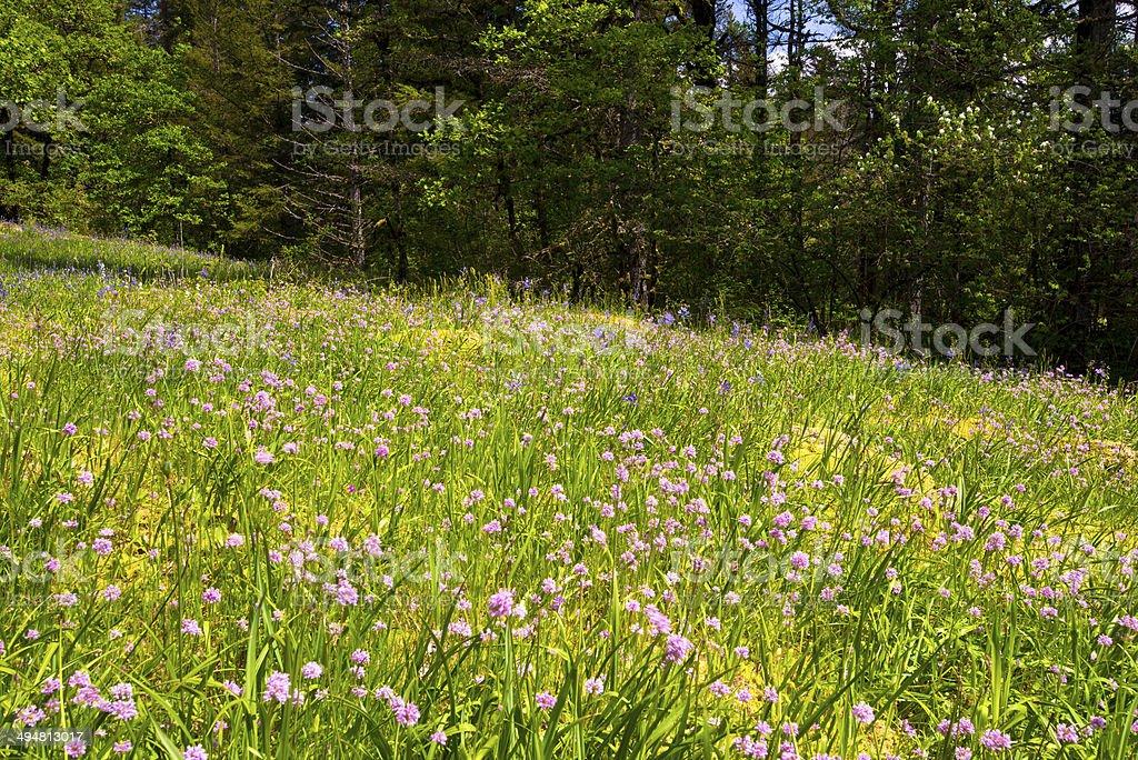 Fiore radura sul margine della foresta di primavera foto stock royalty-free
