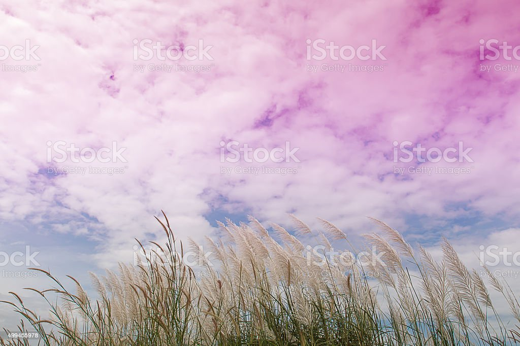 flower grass ,gradient colorful for backgrounds and sky stock photo