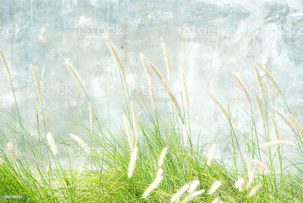 Flower grass impact sunlight stock photo