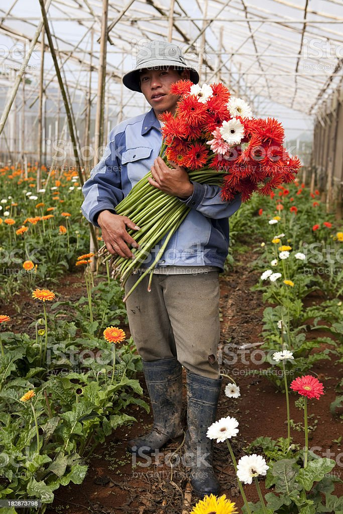 flower greenhouse dalat vietnam agricultural worker royalty-free stock photo