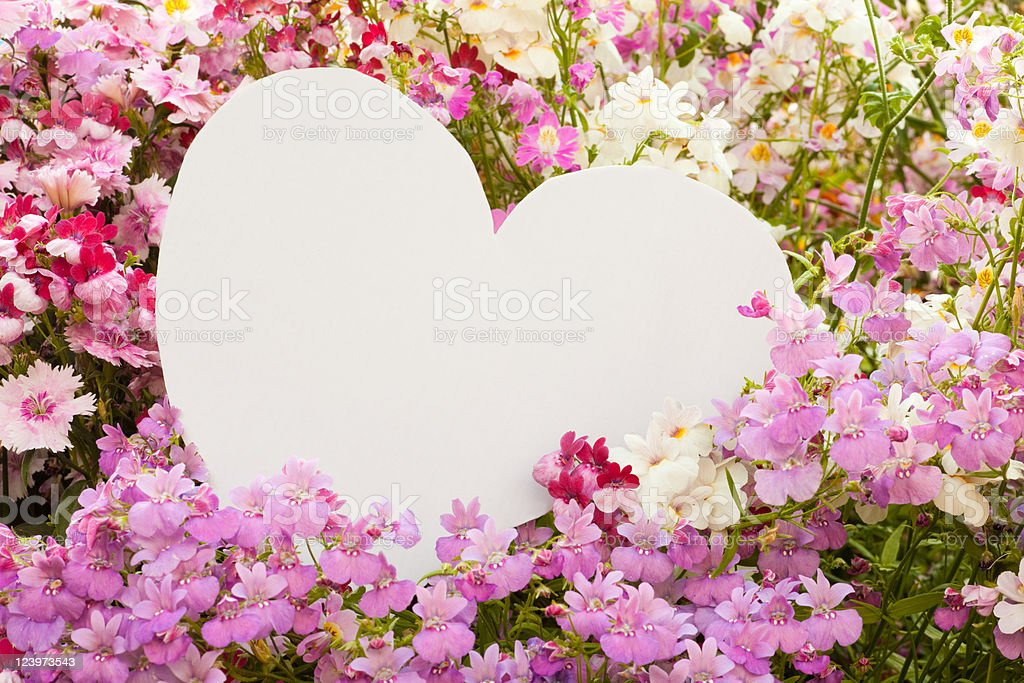 Flower greetings from heart royalty-free stock photo