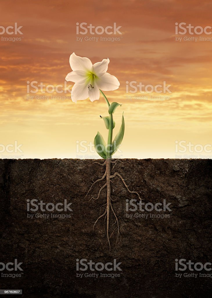 flower grow royalty-free stock photo