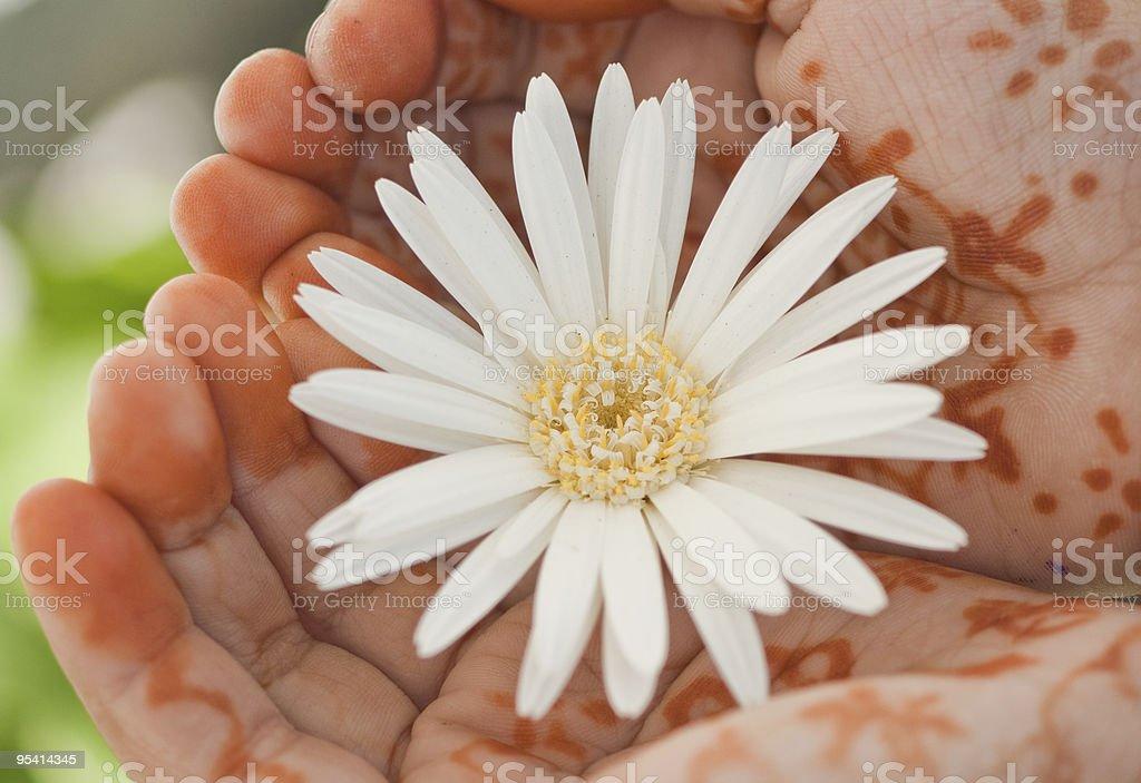 Flower & Hand stock photo