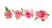 Flower head of roses
