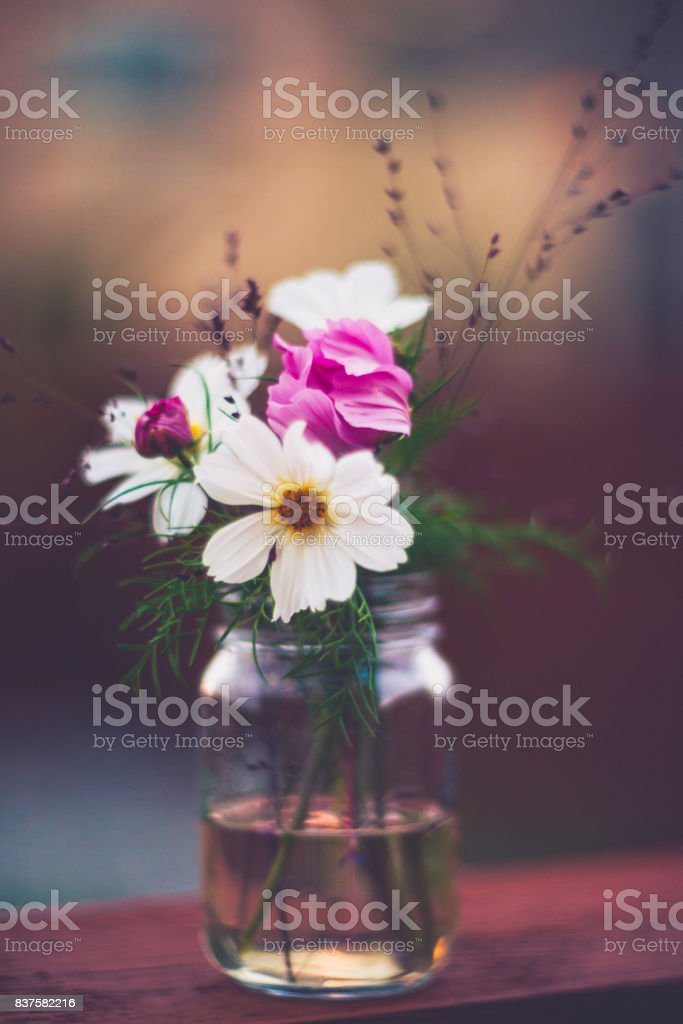 Flower Immersion. Simple bouquet of cosmos flowers in glass jar stock photo