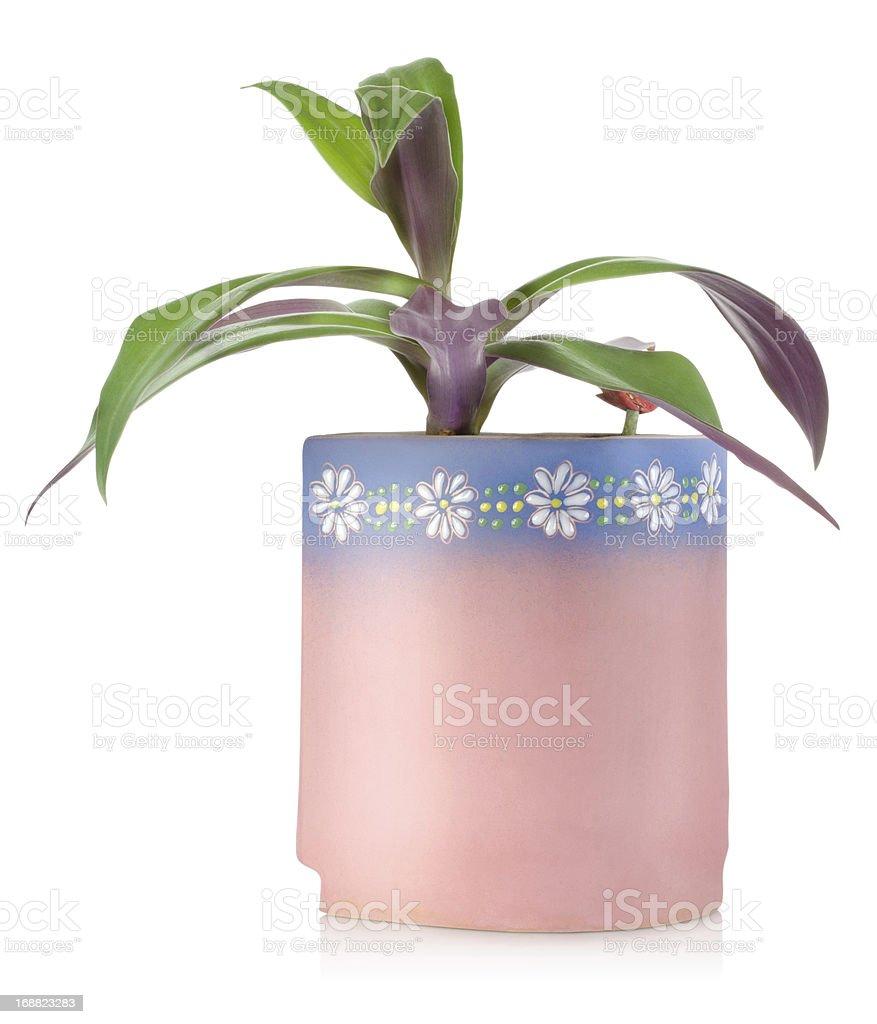Flower in a ceramic pot stock photo