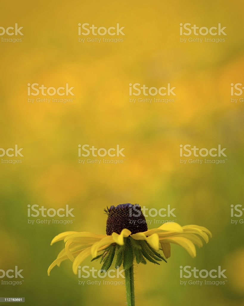 Flower in a field of wildflowers stock photo