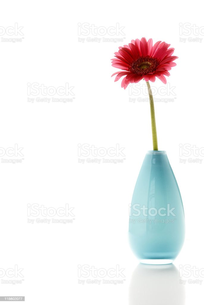 Flower in a pot on white background stock photo