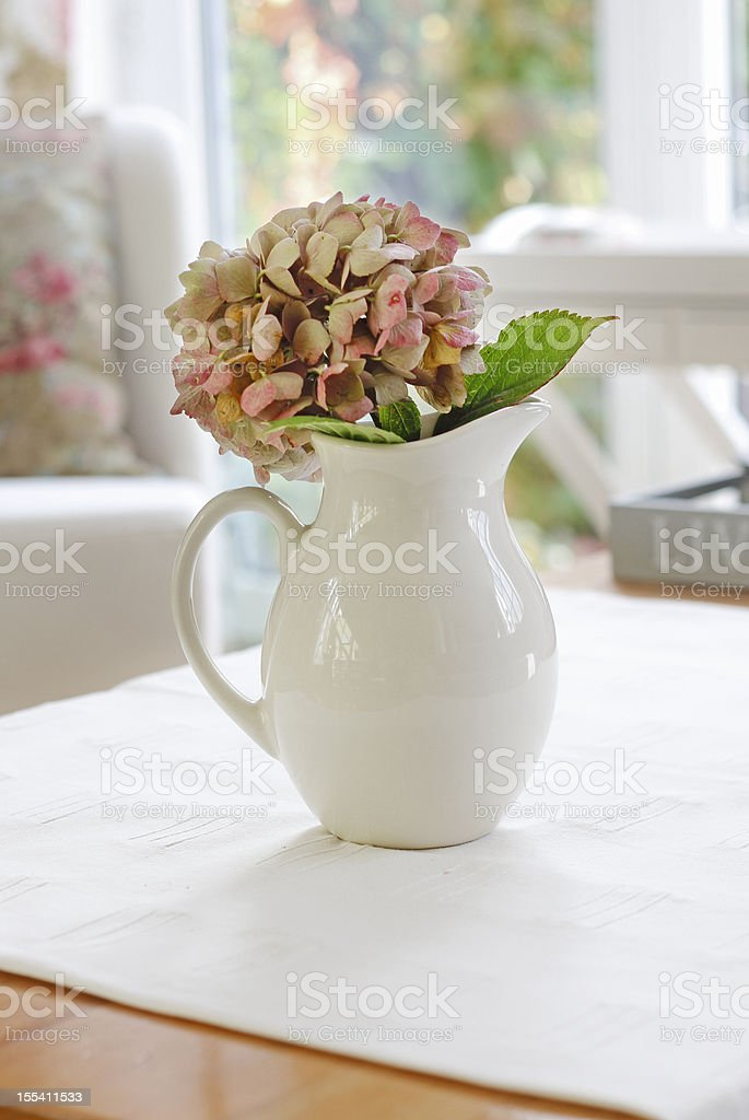 Flower in a pot royalty-free stock photo