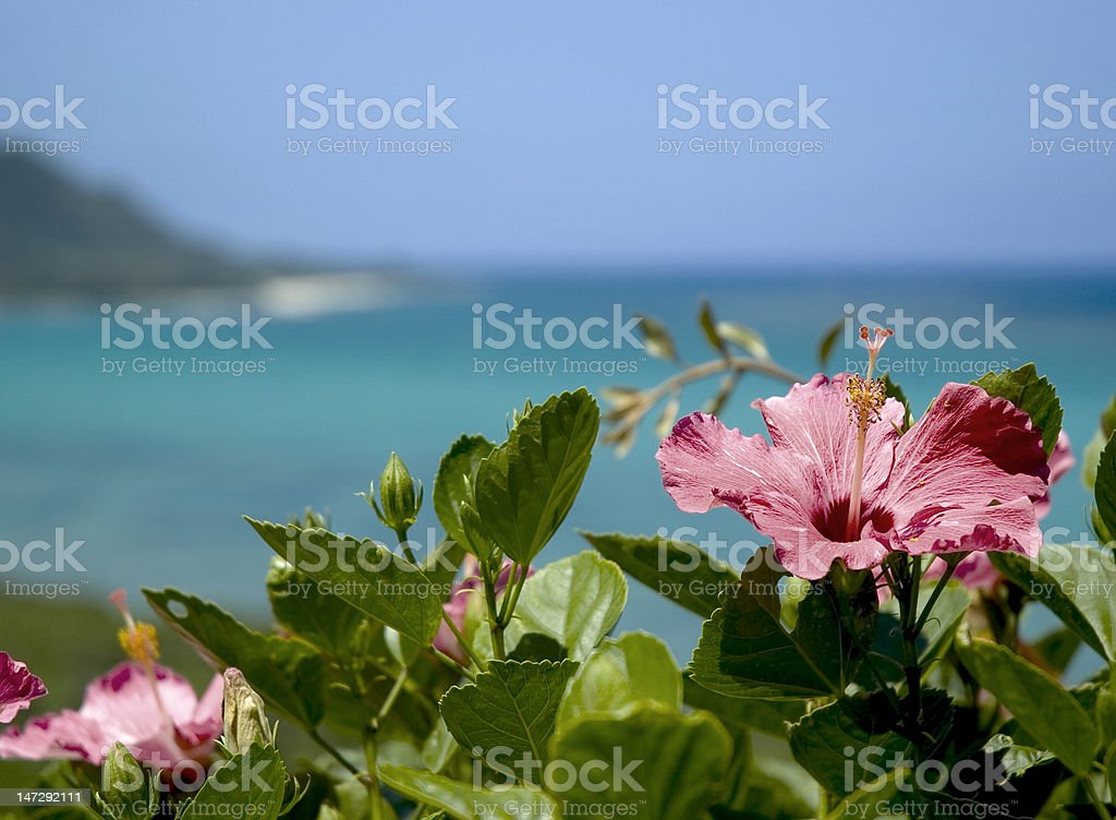 Flower in beach stock photo