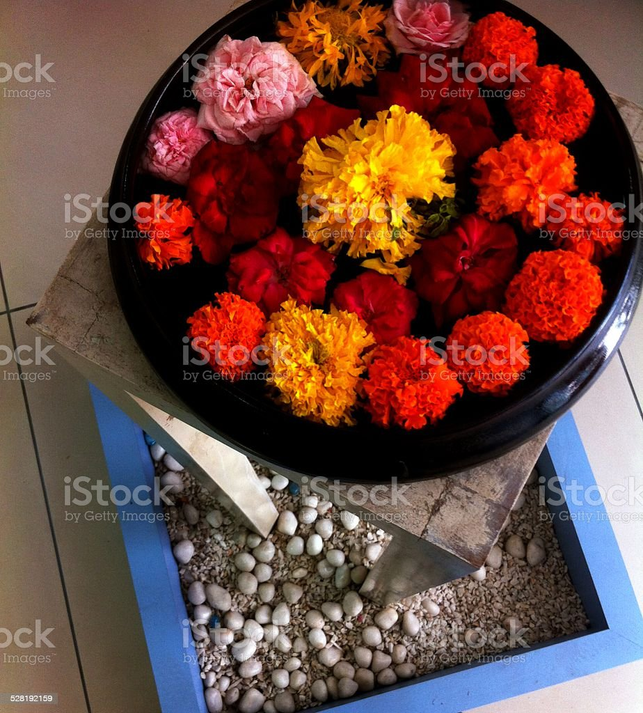 Flower in bowl stock photo