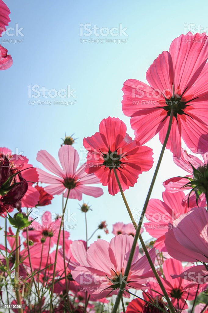 Flower in gardens stock photo
