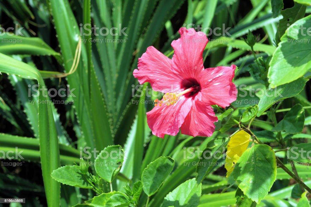 Flower in Ishigaki island stock photo