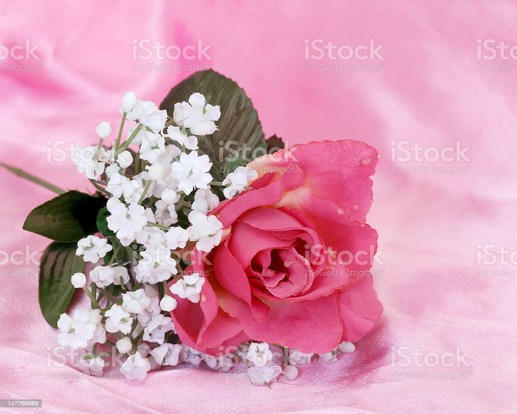 Flower in Pink stock photo